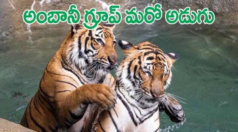 Ambani- New Zoo Park