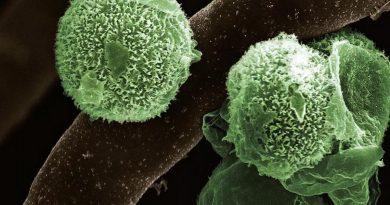 Green Fungus Case